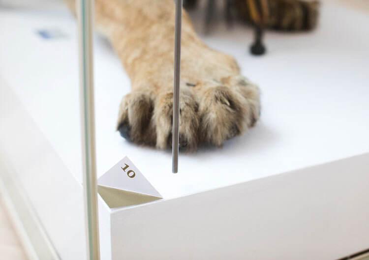 圣奥尔本斯博物馆和画廊设计了品牌形象设计和标识系统设计
